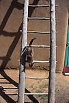 cat on ladder at Taos Pueblo