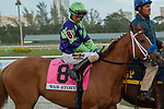 HALLANDALE BEACH, FL  JANUARY 27: #8 War Story, ridden by Jose Ortiz, heads into the saddling paddock before the Pegasus World Cup Invitational, at Gulfstream Park Race Track on January 27, 2018,  in Hallandale Beach, Florida. (Photo by Casey Phillips/ Eclipse Sportswire/ Getty Images)