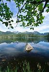 Prime eagle habitat consists of fish-bearing waters and towering trees, Coastal Lake, Alaska