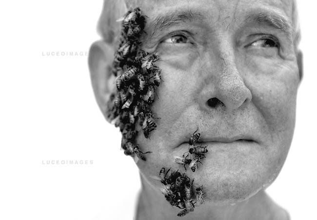 """Dr. Norman Gary has worked with bees for more than 40 years and estimates being stung more than 75,000 times throughout his career. kpgec """"Bee Man"""""""