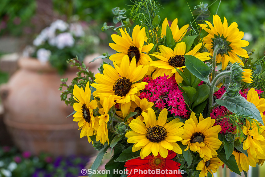 Sunfinity™ sunflower - Syngenta Flowers