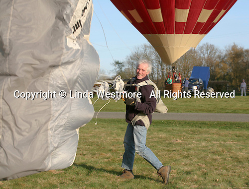 Exhilarated parachutist gather up his parachute having landed successfully.