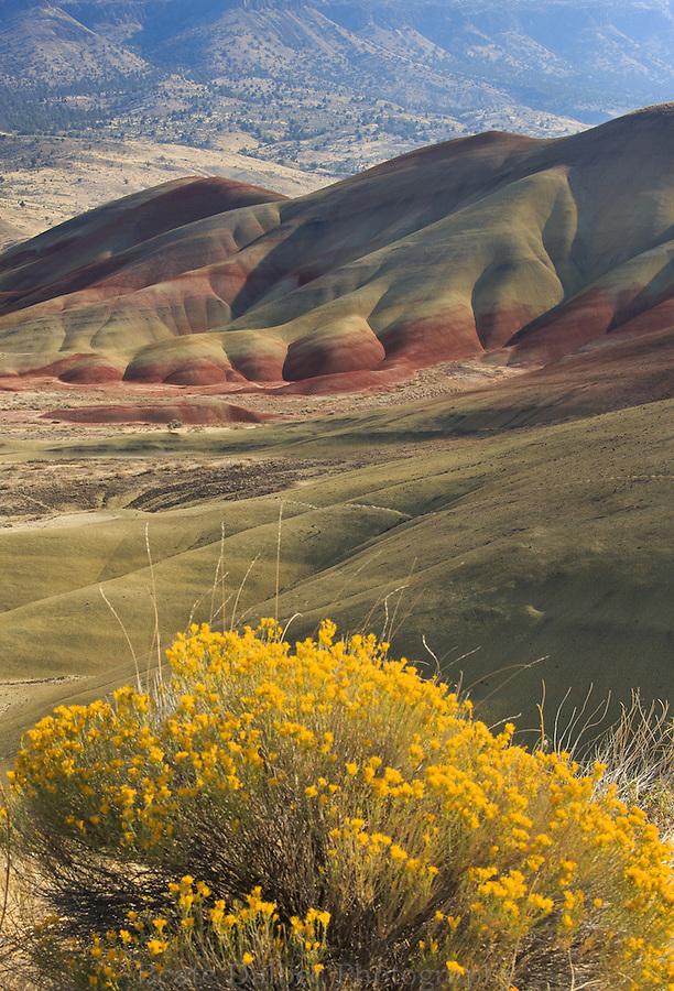 Painted hills and Sagebrush, Oregon