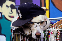 A golden retriver dog with sunglasses and a hat sitting in a shopping basket