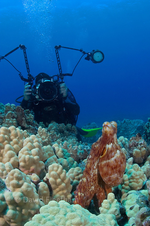 Photographer (MR) and a day octopus, Octopus cyanea.  Hawaii.