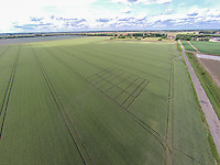 Wheat trials - Lincolnshire, July