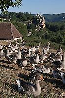 Europe/France/Midi-Pyrénées/46/Lot/Vallée de la Dordone/Lacave: Oies et Château de Belcastel