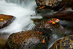 Fall foliage on the Cutler River at Crystal Cascade, Pinkham Notch, White Mountain National Forest, NH, USA