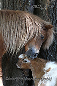 Bob, ANIMALS, REALISTISCHE TIERE, ANIMALES REALISTICOS, horses, photos+++++,GBLA3916,#a#, EVERYDAY