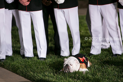 Chesty XIV, the Marine Corps Mascot, attends the Marine Barracks Washington, D.C. Evening Parade in Washington, D.C., on Friday, June 27, 2014. <br /> Credit: Kristoffer Tripplaar  / Pool via CNP