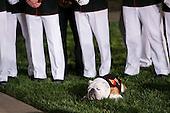 Chesty XIV, the Marine Corps Mascot, attends the Marine Barracks Washington, D.C. Evening Parade in Washington, D.C., on Friday, June 27, 2014. <br /> Credit: Kristoffer Tripplaar  / Pool via CNP