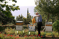 An at apiary facing the Mediterranean near Hyeres, France,