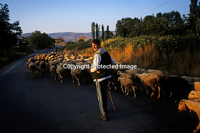 A sheepherder walks on a road on his way home in the early evening hours on June 28, 1999, outside Pristina, the capital of Kosovo. NATO soldiers entered Kosovo in June 1998 and refugees started to return from Macedonia and Albania, after a Serb occupation and terror of Kosovo. (Photo by: Per-Anders Pettersson)