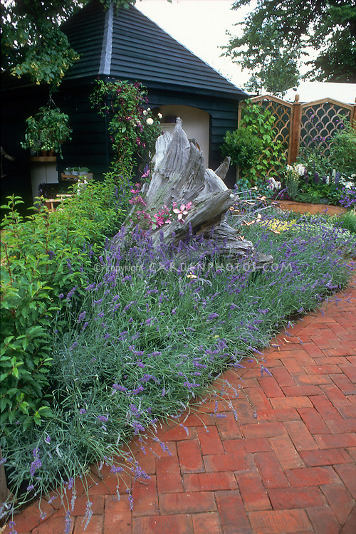 English lavender Lavandula angustifolia surrounding rustic wooden tree trunk next to brick pathway, gazebo, pretty backyard garden, clematis vine climbing driftwood stump, clematis climbing with roses Rosa on arbor trellis, privacy fencing