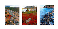 Acadia Collage 2