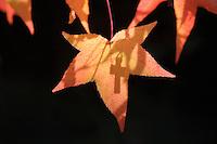 Crucifix, Dolomiti Italy.16.11.2009.