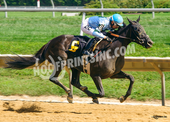 Ivy Pepper winning at Delaware Park on 8/11/16