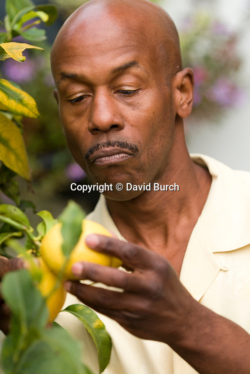 Man picking lemons, front view