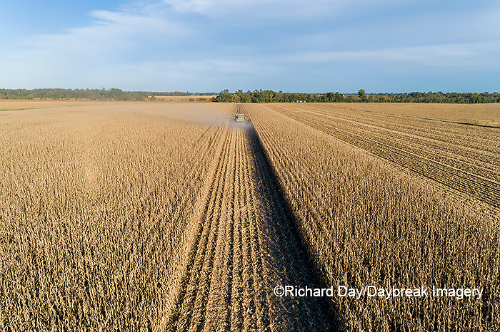 63801-13016 Harvesting corn in fall-aerial  Marion Co. IL
