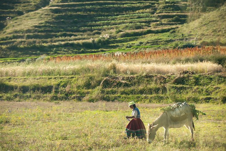 The pre-inca irrigation system and fertile terraced terraced mountains create ideal conditions for farming in the Colca valley. The agricultural terracing, in use for over 1000 years, cover most of the Valley forming a beautiful sculptured landscape.