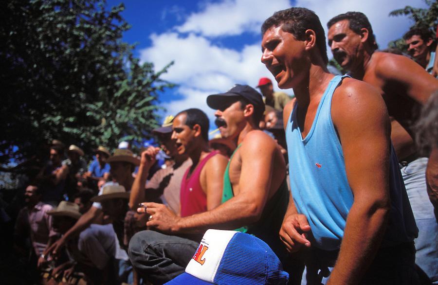 Raucous spectators urge on the fighting birds.