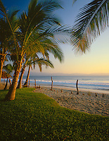Nayarit, Mexico:  Coconut palms (Coco nucifera) on the beach of Bahia de Banderas (Banderas Bay) near the village of Bucerias