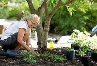 NWA Democrat-Gazette/JASON IVESTER <br /> Susan Frey plants astibles on Monday, Aug. 31, 2015, at Wilson Park in Fayetteville. The three-person crew from Fayetteville Parks and Recreation were planting the perennials alongside the walking trail at the park.