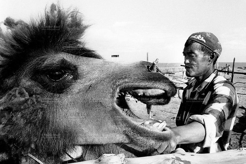 Kazakhstan. Dzambul. An old Kazakh man, a farmer, with his camel. Dzambul is located in the Kyzyl Orda Province. © 2008 Didier Ruef