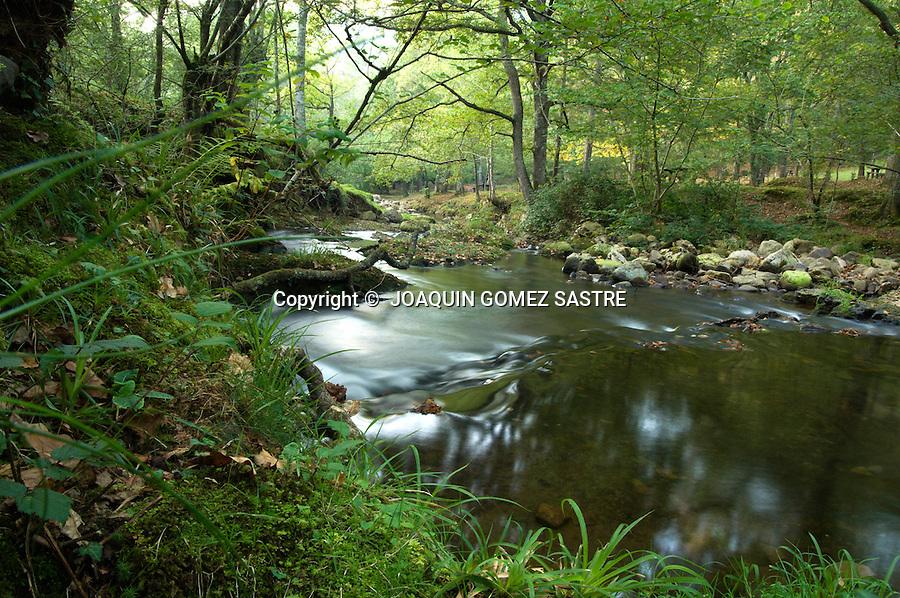 RESERVA NATURAL DEL SAJA.Vista de alguno de los arboles  y el rio que se pueden ver en la reserva Natural del Saja en Cantabria..foto JOAQUIN GOMEZ SASTRE