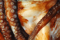 Abstract Close-up of Giant Pacific Octopus (OCTOPUS DOFLEINI). Halibut Cove, Kachemak Bay, Alaska,  USA
