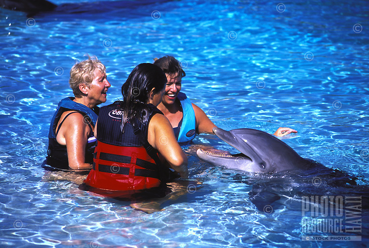 Tourists swimming with dolphins at Sea Life Park, Oahu
