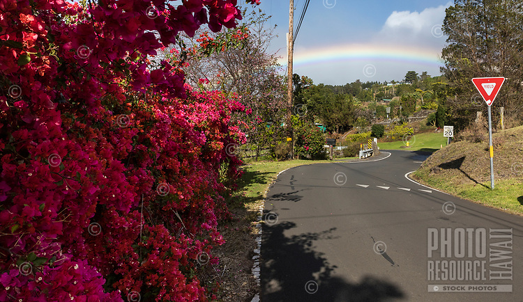 Street scene with bouganvilla flowers in Kula, Maui