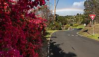 Street scene with bouganvilla flowers in Kula, Maui
