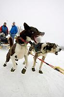 Bryan Mills Wheel Dogs Bark & Lunge to Go @ Takotna Chkpt 2005 Iditarod