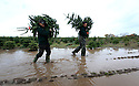 """22/11/12 ..Plantation manager, Tom Theobald (28) (right)and Romando Miljons (27) carry freshly cut trees through a muddy field near Cadeby, Leicestershire today...This year's Christmas Tree harvest is running behind schedule at one of Britain's largest producers of the festive trees. ..Alex Theobald, director of Cadeby Tree Trust in Leicestershire, said: """"The older trees have really enjoyed the wet weather this summer - they're in great condition and are really green. But the weather over the last few days has put us back by at least three days. ..""""We're having to take the trees out of the fields individually rather than loading them onto trailers in the mud...""""We have to keep the trees clean - people don't want muddy trees in their homes.""""..The company's yard is slowly filling up with trees. They expect to sell 85,000 trees and will begin dispatching to garden centres next week...""""If it gets any wetter, the delays could get worse. It's a problem everywhere - I know one farm where they're having to wear waders to harvest the trees,"""" added Alex...All Rights Reserved - F Stop Press.  www.fstoppress.com. Tel: +44 (0)1335 300098."""
