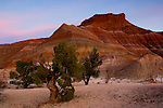 Evening light over Juniper Pines and butte along the Cockscomb, Grand Staircase Escalante National Monument, Utah