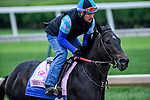 LOUISVILLE, KENTUCKY - APRIL 28: Serengeti Empress, trained by Tom Amoss, exercises in preparation for the Kentucky Oaks at Churchill Downs in Louisville, Kentucky on April 28, 2019. John Voorhees/Eclipse Sportswire/CSM