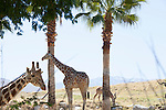 The Living Desert (zoo), Palm Springs, California, USA