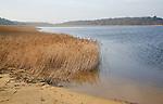 Benacre Broad national nature reserve, Suffolk, England