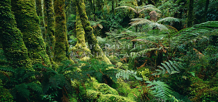 Mossy bush & ferns in Breaksea Sound. Fiordland National Park. New Zealand.