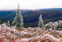 "Frost Covered Trees, Grasses, and Plants along ""Top of the World"" Highway (elev 3493 ft), near Dawson City, YT, Yukon Territory, Canada, Summer (August)"