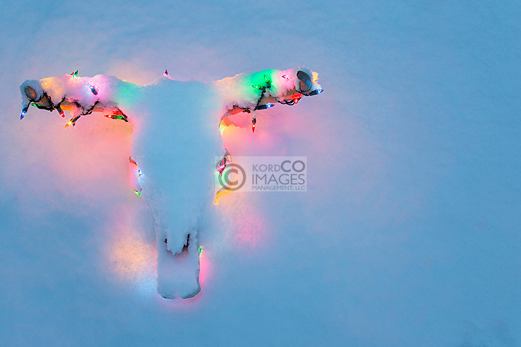 BLEACHED COW STEER SKULL AND HORNS DECORATED WITH MULTI COLORED CHRISTMAS LIGHTS UNDER A COATING OF SNOW