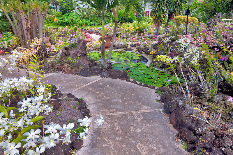 Orchids and path at Moir Gardens. Klahuna Plantation Resort. Kauai, Hawaii