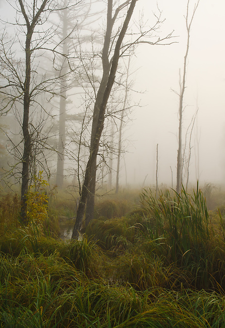 Morning fog envelopes a wetland area of Big Bay State Park on Madeline Island in the Apostle Islands, Ashland County, Wisconsin