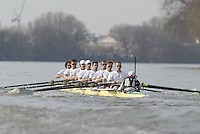 London, GREAT BRITAIN,  Cambridge UBC,   move along The Fulham Wall, during the 2007 Boat Race, between Putney and Mortlake, on  Sat. April 7th. England [Photo Peter Spurrier/Intersport Images].CAMBRIDGE BLUE BOAT, [Left] bow, Kristopher McDaniel, Dan O?Shaughnessy, Peter Champion, Jacob (Jake) Cornelius, Tom James [President], Kieran West, Sebastian Schulte, Thorsten Engelmann, cox, Rebecca Dowbiggin Varsity Boat Race, Rowing Course: River Thames, Championship course, Putney to Mortlake 4.25 Miles,