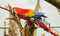 Papagei - Jaderberg 21.07.2020: Tier- und Freizeitpark Jaderpark