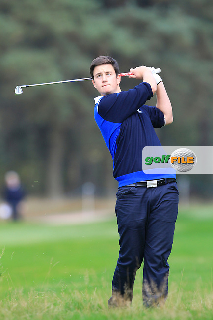 Max Schmitt (GER) on the 5th hole of the Mixed Fourballs, puts to go two up during the 2014 JUNIOR RYDER CUP at the Blairgowrie Golf Club, Perthshire, Scotland. <br /> Picture:  Thos Caffrey / www.golffile.ie