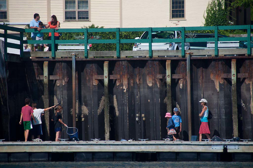 Looking for Starfish at the Town Dock, Castine, Maine, US