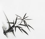 Bamboo stalk with leaves Japanese Zen painting Sumi-e, black ink on rice paper illustration fine art artwork minimalistic element design