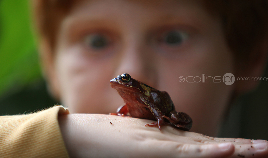 16/08/2010.Cian Moreno Gahan (10) from Drogheda with a common frog. at the launch of Launch of Wild Child Day in St. Stpehens Green, Dublin..Wild Child Day is part of National Heritage Week, which is coordinated by the Heritage Council, runs from 21st - 29th August 2010 and is a celebration of Irish natural and cultural heritage..The idea behind Wild Child Day is to encourage families and kids to get outdoors and interact and connect with the natural world to see the beauty and benefits it has to offer. .Photo: Gareth Chaney Collins